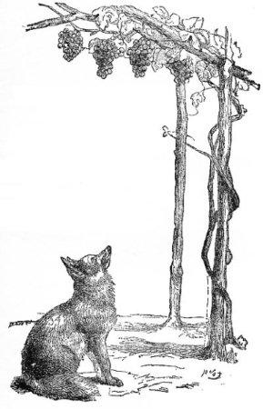 la-volpe