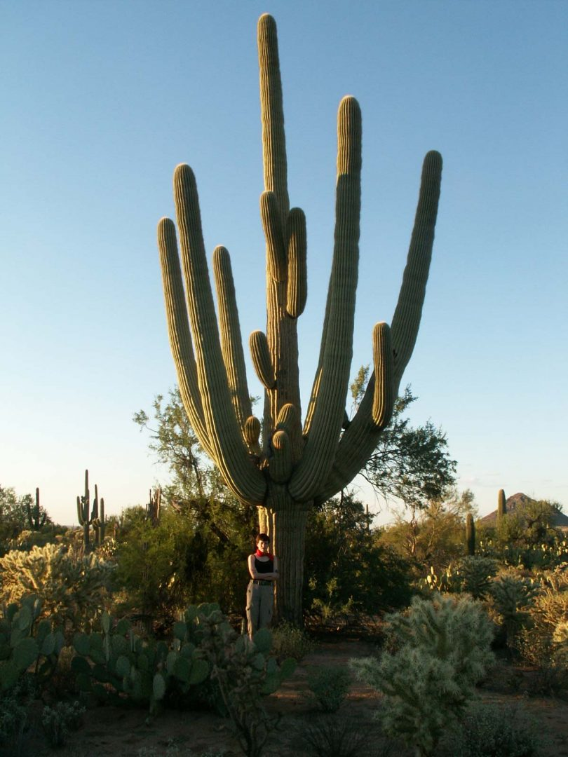 A-Very-Old-Saguaro-right-outside-the-Saguaro-National-Park-Arizona