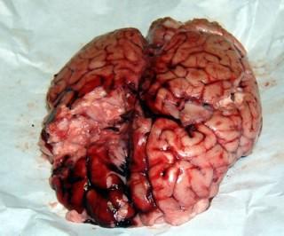 Cervella 064